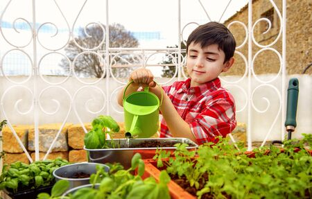 child gardening by watering aromatic plants such as basil and parsley Stockfoto