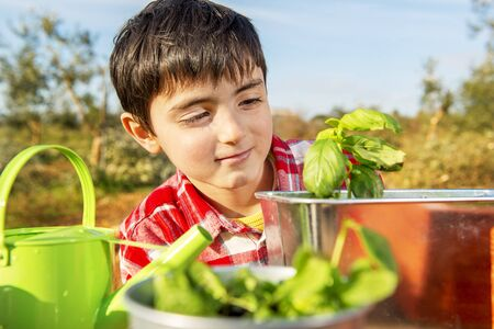 young child sows aromatic plants in the middle of the countryside Banque d'images