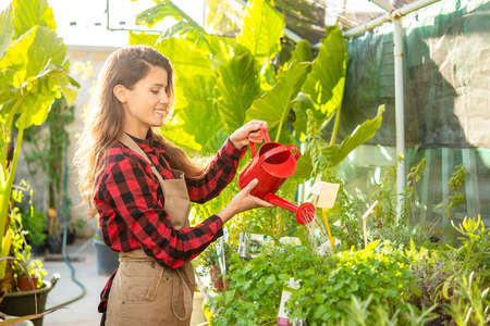 farmer waters the plants in a sunny greenhouse