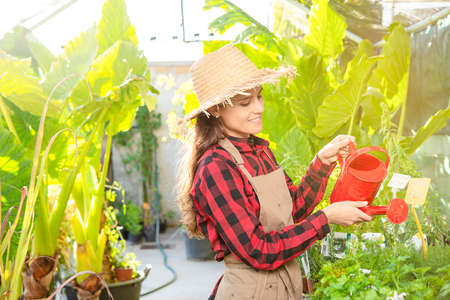 happy farmer watering the plants with can in a plant and flower shop green business Banque d'images