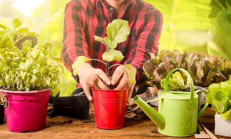hands plant an eggplant plant on a table. concept of green pastime and in contact with nature. green job