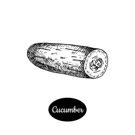 cucumber slice: Fresh cucumber. Hand drawn sketch style vegetarian vector illustration. Isolated drawing on white background. Vitamin and healthy eco food. Farm market produce. Illustration
