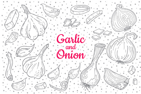 Onion and garlic hand drawn illustration set. Hand drawn isolated illustration. Farm market product. Great for menu, label, icon.