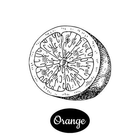신선한 오렌지. 손으로 그린 스케치 스타일 열 대 여름 과일 벡터 일러스트 레이 션. 흰색 배경에 고립 된 드로잉입니다. 비타민과 건강한 과일 에코 음
