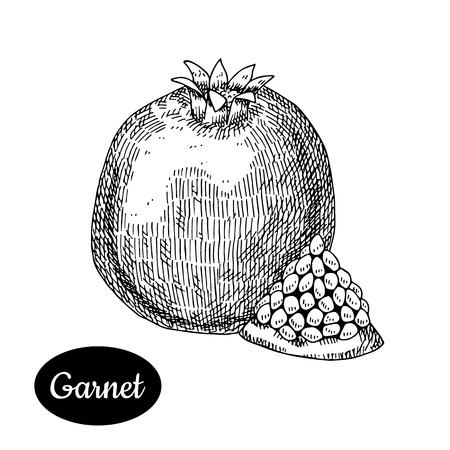 Fresh garnet. Hand drawn sketch style tropical summer fruit vector illustration. Isolated drawing on white background. Vitamin and healthy fruit eco food. Farm market produce.