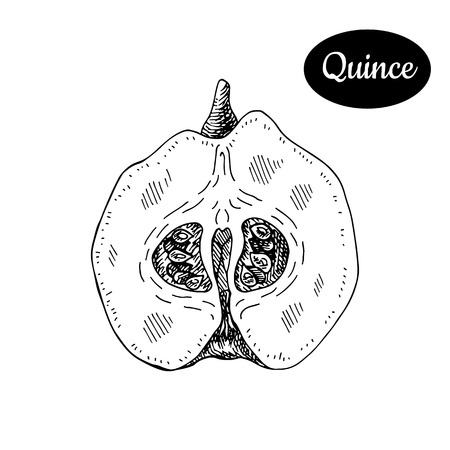 Fresh quince. Hand drawn sketch style tropical summer fruit vector illustration. Isolated drawing on white background. Vitamin and healthy fruit eco food. Farm market produce. Illustration