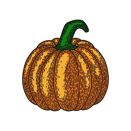 Pumpkin isolated on white background. Old vintage style hand drawing engraved. Design element for banner, menu, poster, web.