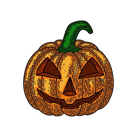 Halloween pumpkin isolated on white background. Old vintage style hand drawing engraved. Design element for banner, menu, poster, web.