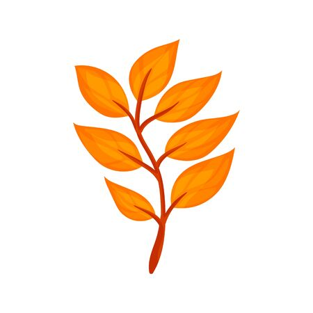 Colorful autumn tree leaf. Vector illustration isolated on a white background.