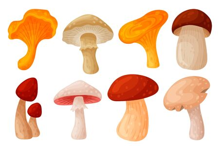 Set of colorful fresh autumn wild forest mushrooms. Cartoon flat style silhouettes icons. Great autumn design concept elements. Vector illustration isolated on white background.