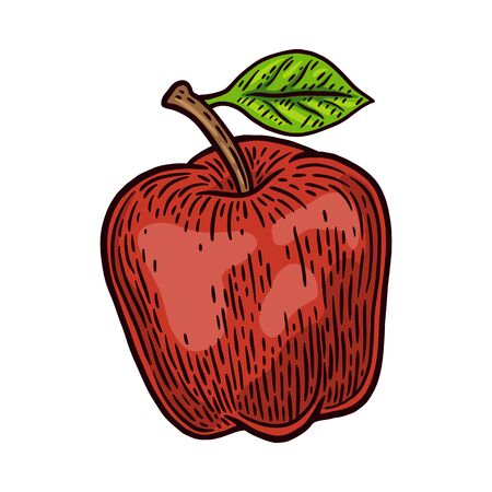 Vintage retro fresh red apple isolated vector illustration on a white background. Design element for logo, badge, tattoo, banner, poster.
