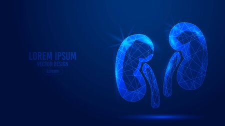 Kidneys human organ geometric lines, low polygon triangles style wireframe vector banner template. Isolated medicine science technology concept on a blue background polygonal 3d abstract.
