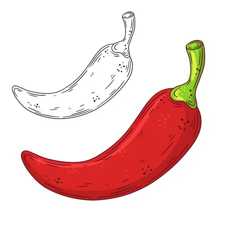 Hand drawn doodle red chilli pepper. Vector illustration isolated on white background. Design element.