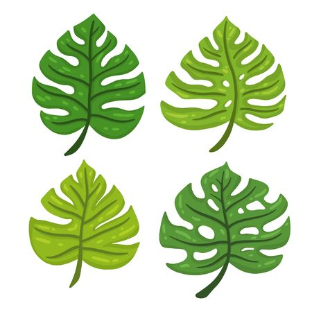 Cartoon set of tropical leaves Monstera. Design element. Vector illustration isolated on a white background. Illustration