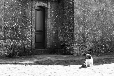 a dog sits alone