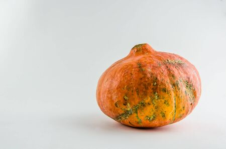 ugly food. orange pumpkin on a white background. copy space Stock Photo