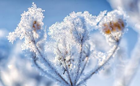macro. beautiful snowflake on a blade of grass in winter in the sun. winter backgroud