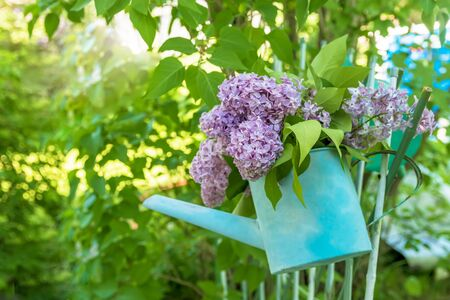 beautiful bouquet of lilacs in blue garden watering with copy space