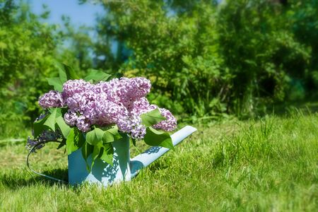 beautiful bouquet of lilacs in garden watering on the grass with copy space Standard-Bild