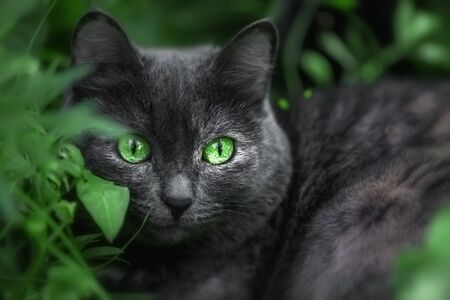 Beautiful cat with bright green eyes in the grass