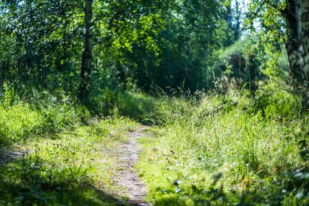 footpath in the summer forest. sunny day, nature Banque d'images