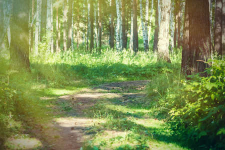footpath in the summer forest. sunny day, nature 스톡 콘텐츠