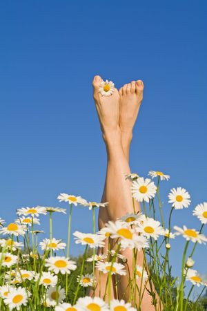 dasiy: Woman legs sprouting from a bunch of daisies against blue sky