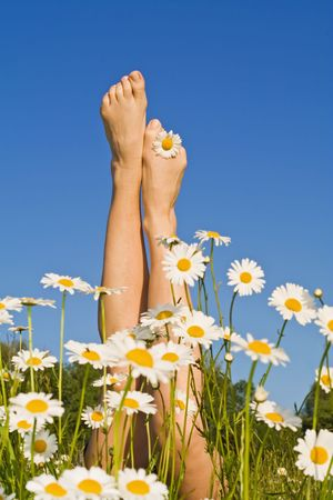 whimsical: Woman legs sprouting from a bunch of daisies in the spring or summer field - against blue sky Stock Photo