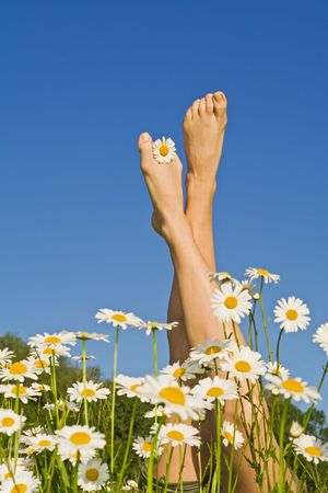 dasiy: Nice woman legs sticking out from a bunch of daisies, against blue sky Stock Photo