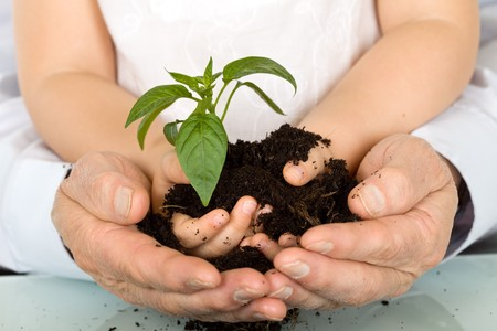 hand holding plant: Child and adult hands holding new plant with soil
