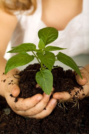 Kid hands holding a new plant in soil - closeup, shallow depth of field Stock Photo
