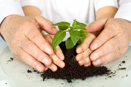 young to old: Old and young hands protecting a plant - environmental education concept