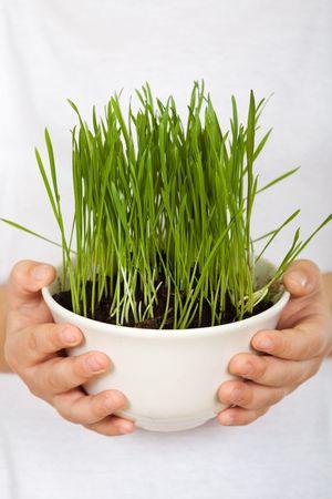 educazione ambientale: Mani Boy holding erba in una ciotola, primo piano - concetto di educazione ambientale di sensibilizzazione Archivio Fotografico