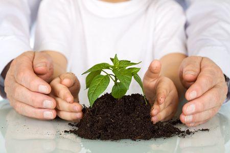 오늘 묘목을 심 으십시오 - 환경을 가르치고 나이 든 젊은 손으로 nursling을 보호하는 교육 개념