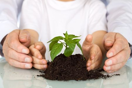 small plant: Plant a seedling today - environment and education concept with old and young hands protecting a nursling