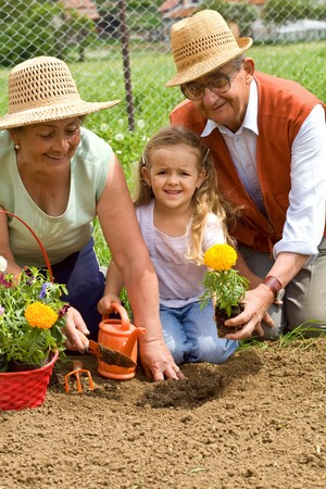 Grandparents teaching little girl the ways of gardening - planting flowers together photo