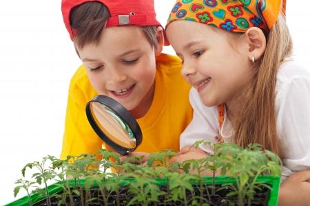 educacion ambiental: Los niños aprenden a producir alimentos: la educación la conciencia ambiental Foto de archivo
