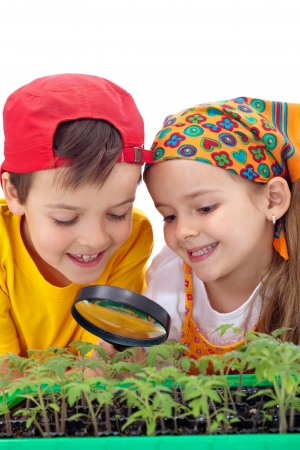 organic concept: Growing your own food - kids study tomato seedlings with magnifier