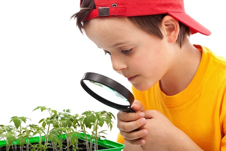 veggie tray: Boy studies young plants looking through magnifier - closeup