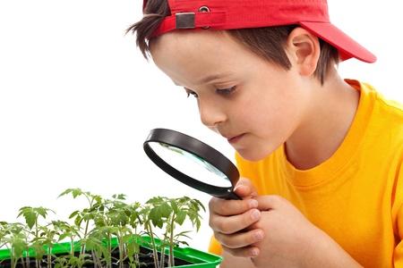 germinaci�n: Estudios Boy plantas j�venes que buscan a trav�s de lupa - Detalle