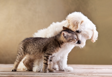 dog and cat: Friends - small dog and cat together Stock Photo