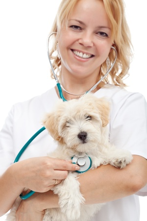 Small fluffy dog at the veterinary doctor - isolated, closeup Stock Photo - 14452517