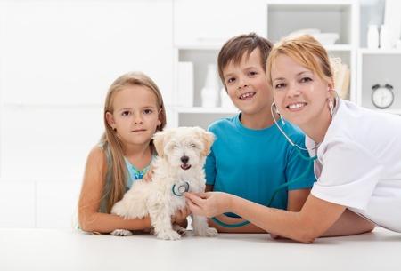 veterinaria: Los ni�os que toman su mascota suave y esponjosa con el m�dico veterinario para un chequeo - Copyspace
