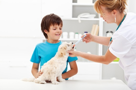 Pet taking medicine - young boy with his fluffy dog at the veterinary doctor photo