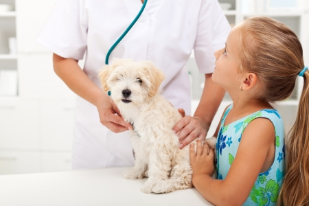 laboratory animal: Little girl and her fluffy dog at the veterinary doctor office Stock Photo