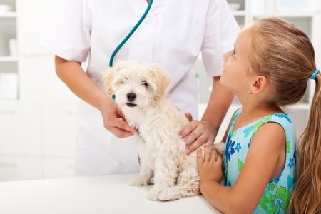Mała dziewczynka i jej puszysty pies na Weterynarii lekarza Zdjęcie Seryjne