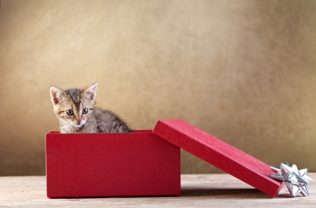 A kitten for present - young cat peeking out of a gift box, copy space photo