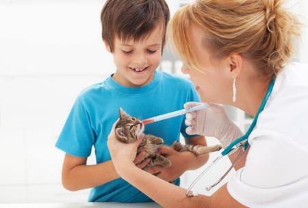 veterinaria: Gatito en la medicina veterinaria conseguir