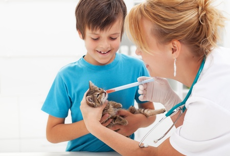 veterinary medicine: Little kitten at the veterinary getting medication Stock Photo