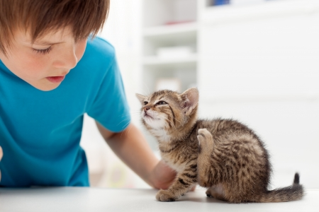scratches: My kitten has fleas - boy looking at his cat scratching its ears Stock Photo